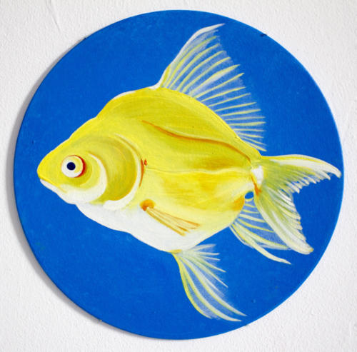 Canary fish